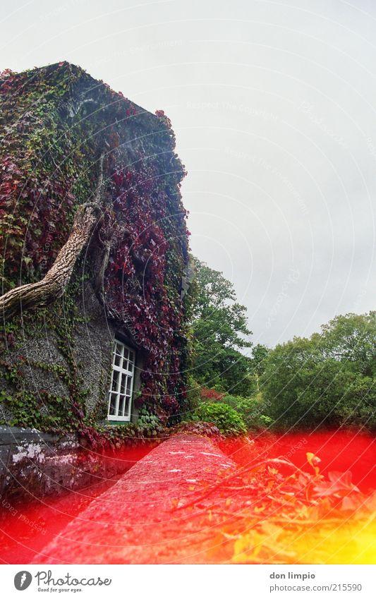 mehr farbe bitte Pflanze rot Ferien & Urlaub & Reisen Haus Herbst Garten Idylle historisch Gutshaus Bildausschnitt ländlich Republik Irland Ranke Efeu typisch