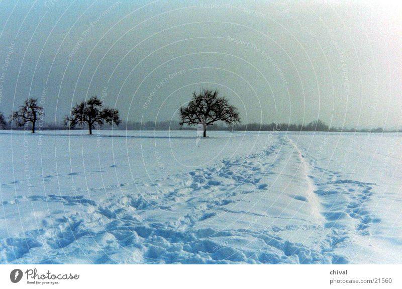 Drei Bäume Winter Schnee Sonne Nebel Ferne Schneespur