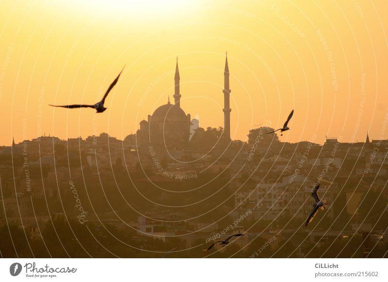 Abend(im)Land Sommer Tier Religion & Glaube Horizont Vogel fliegen Europa Tiergruppe Bauwerk Wolkenloser Himmel Abenddämmerung Sehenswürdigkeit Taube Schwarm
