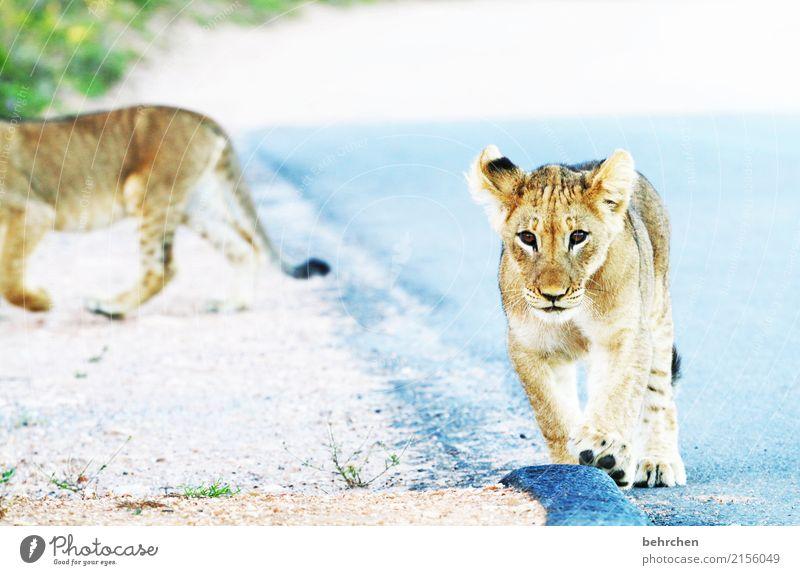 ich seh dich! Natur Ferien & Urlaub & Reisen schön Tier Ferne Tierjunges Spielen außergewöhnlich Tourismus Freiheit Ausflug Wildtier Abenteuer gefährlich