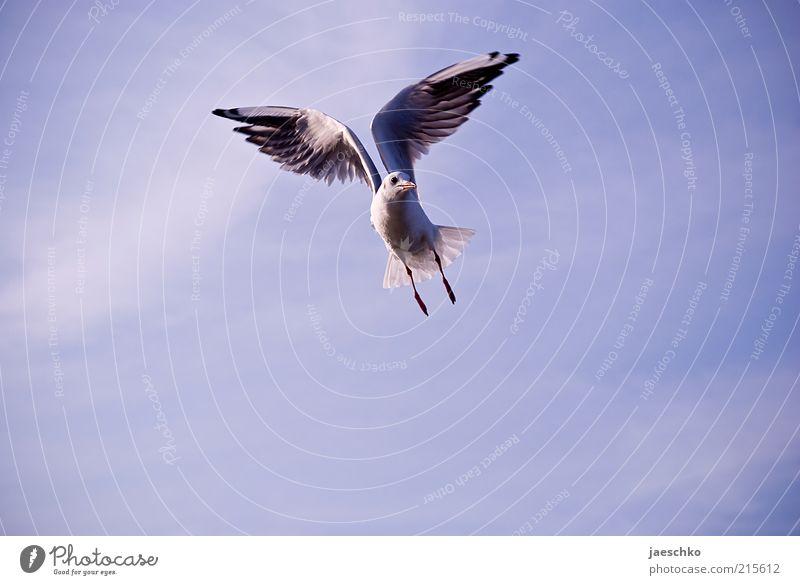Pegasus Natur Tier Freiheit Zufriedenheit Kraft Vogel Wind elegant fliegen frei ästhetisch Flügel Möwe Schweben Stolz Symmetrie