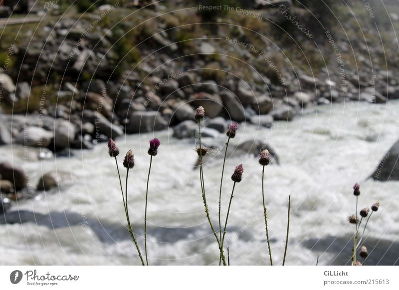 Kaukasische Flora Wasser Blume Pflanze Freude Leben Gras Berge u. Gebirge Stein Kraft Wellen Felsen Erde ästhetisch Fluss Lebensfreude Flussufer