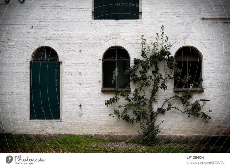 Stocksee GBZweekender weiß Baum Pflanze schwarz Haus ruhig dunkel kalt Fenster Wand Stein Mauer Gebäude Angst Fassade Armut