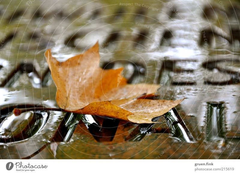 Herbstwort Wasser schlechtes Wetter Regen Blatt Denkmal braun schön ruhig elegant Vergänglichkeit Wort Buchstaben Schriftzeichen Farbfoto Außenaufnahme