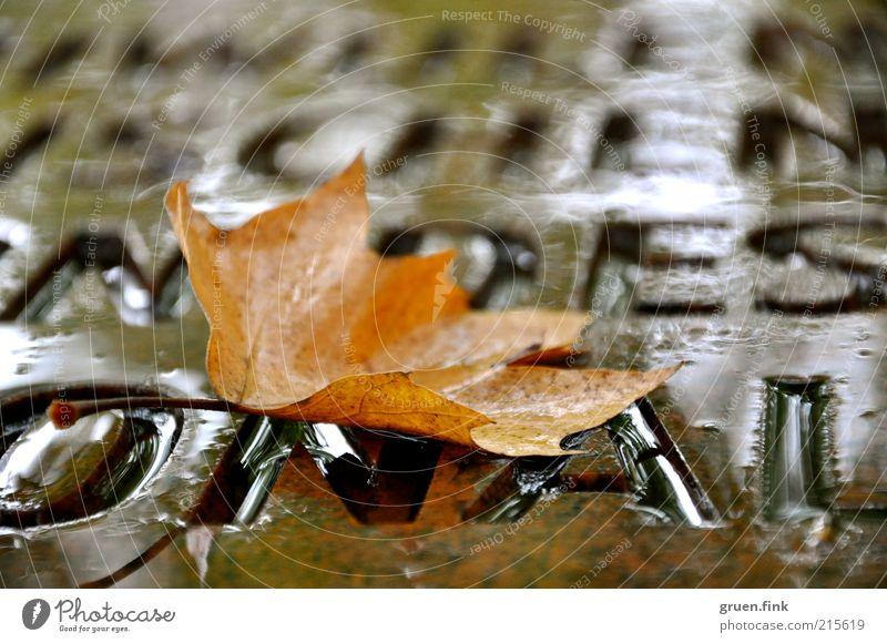Herbstwort Wasser schön ruhig Blatt Regen braun elegant nass Schriftzeichen Buchstaben Vergänglichkeit Denkmal Wort Herbstlaub schlechtes Wetter