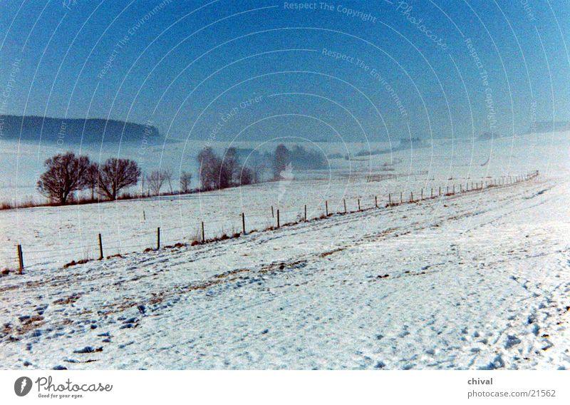 Winterlandschaft Wiese Baum Nebel Schnee Sonne