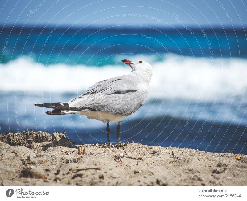 Schulterblick Freude Ferien & Urlaub & Reisen Ausflug Ferne Sightseeing Sommerurlaub Sonnenbad Meer Natur Tier Sand Wasser Schönes Wetter Wind Wellen Küste