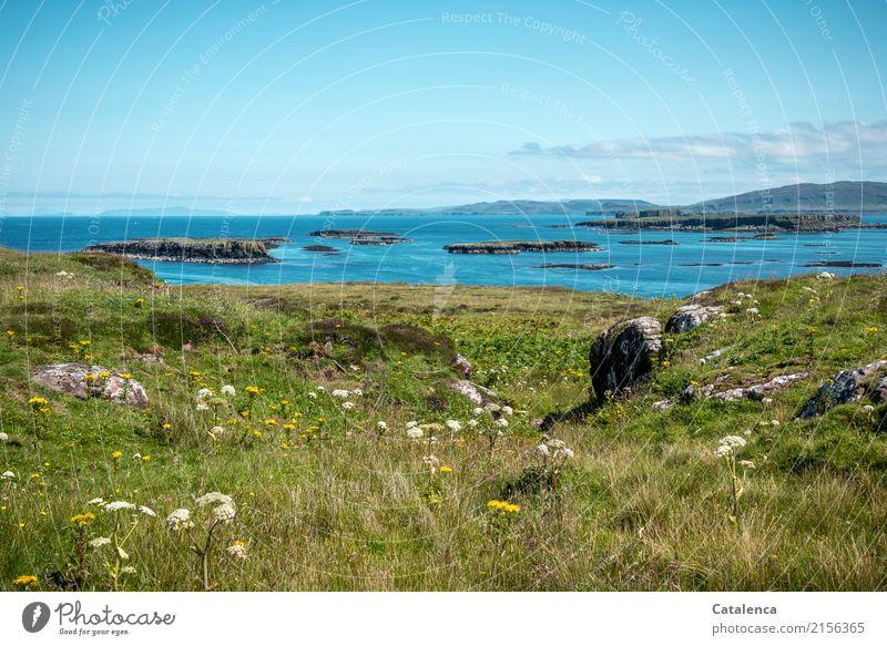 Schöne Aussichten Ferien & Urlaub & Reisen Ferne Sommer Landschaft Wasser Himmel Schönes Wetter Gras Sträucher Blüte Wildpflanze Wiese Hügel Felsen Küste Bucht
