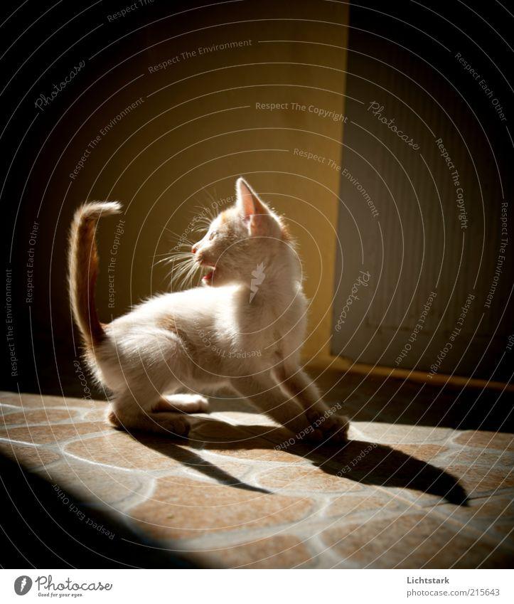 bleib mir fern II rot Tier Spielen Bewegung Katze Angst klein Geschwindigkeit weich wild Wut außergewöhnlich fangen Fell niedlich Jagd