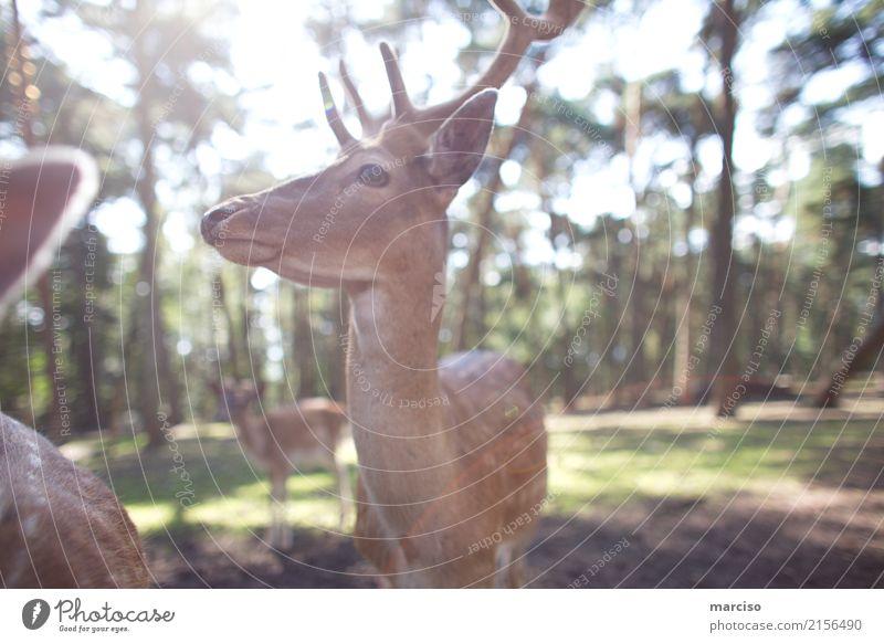 deer Umwelt Natur Tier Sommer Herbst Schönes Wetter Park Wald Wildtier Tiergesicht Reh Rehauge Hirsche Fressen füttern wild Schüchternheit Umweltschutz Farbfoto