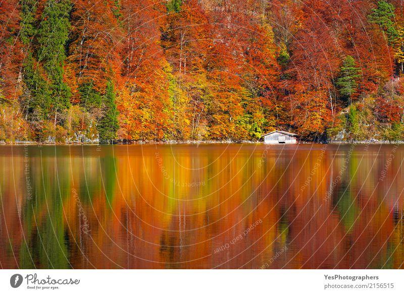 Herbstwald reflektiert im Alpsee See Freude Natur Landschaft Schönes Wetter Blatt Wald Seeufer Fröhlichkeit hell schön gelb gold grün orange rot Reinheit Farbe