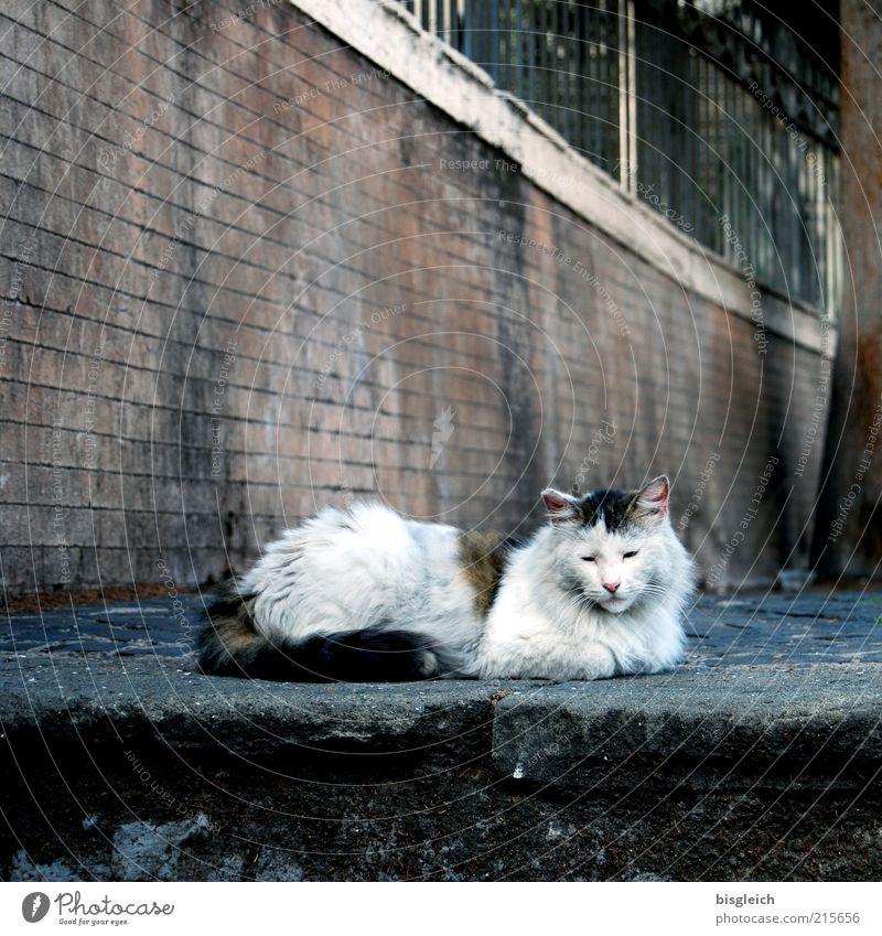 Auszeit Wohlgefühl Zufriedenheit Erholung ruhig Tier Haustier Katze 1 liegen schlafen Gelassenheit Farbfoto Gedeckte Farben Tag Außenaufnahme Menschenleer Mauer