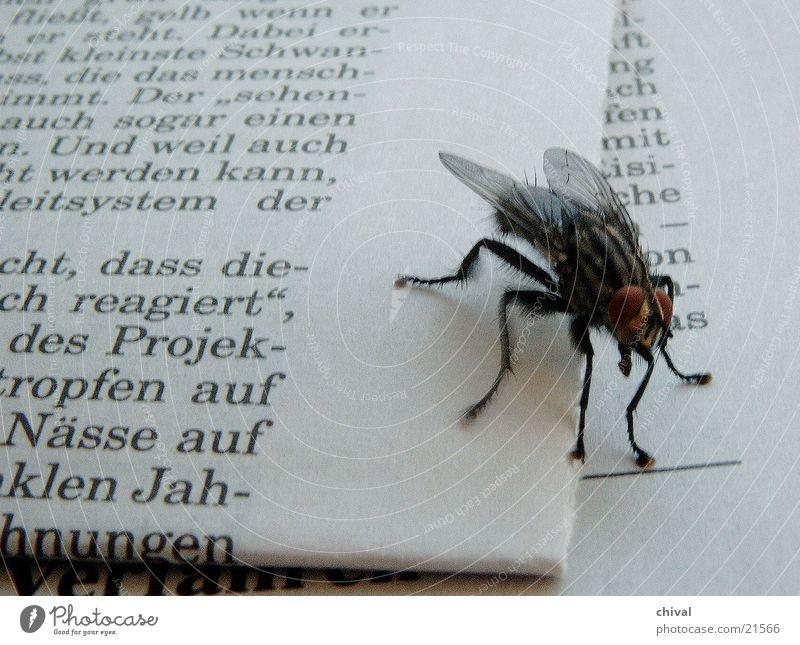 haarig Fliege Zeitung