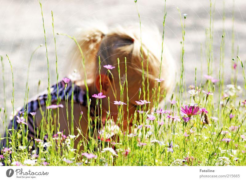 Wie viele Blumen sind das... Mensch Kind Natur Pflanze Mädchen Sommer Blume Umwelt Wiese Gras Kopf Wärme Haare & Frisuren Blüte hell Wetter