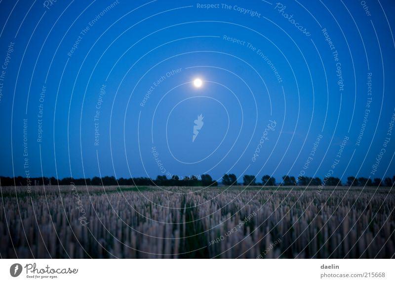field at night Himmel blau ruhig Landschaft Feld Nachthimmel Mond Getreide Abenddämmerung Blauer Himmel Weizen Nacht Vollmond Mondschein Weizenfeld