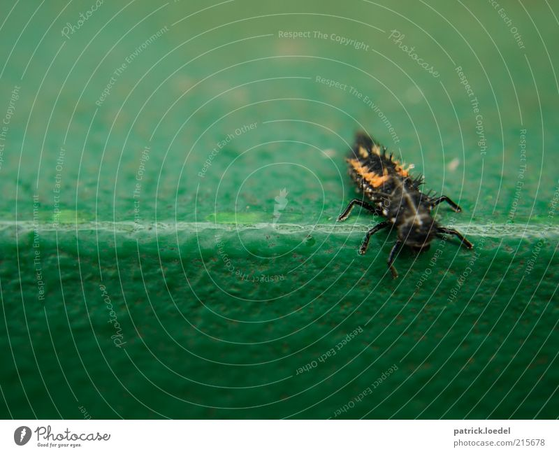 [HH01] ohne Titel grün Tier klein Umwelt Insekt Ekel Am Rand abwärts Käfer krabbeln