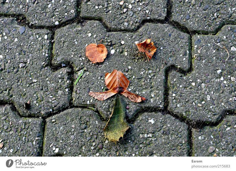 Herbstfreuden blau grün Freude Blatt Tier Gesicht Straße Spielen grau Wege & Pfade Stein braun Kindheit Fröhlichkeit Coolness