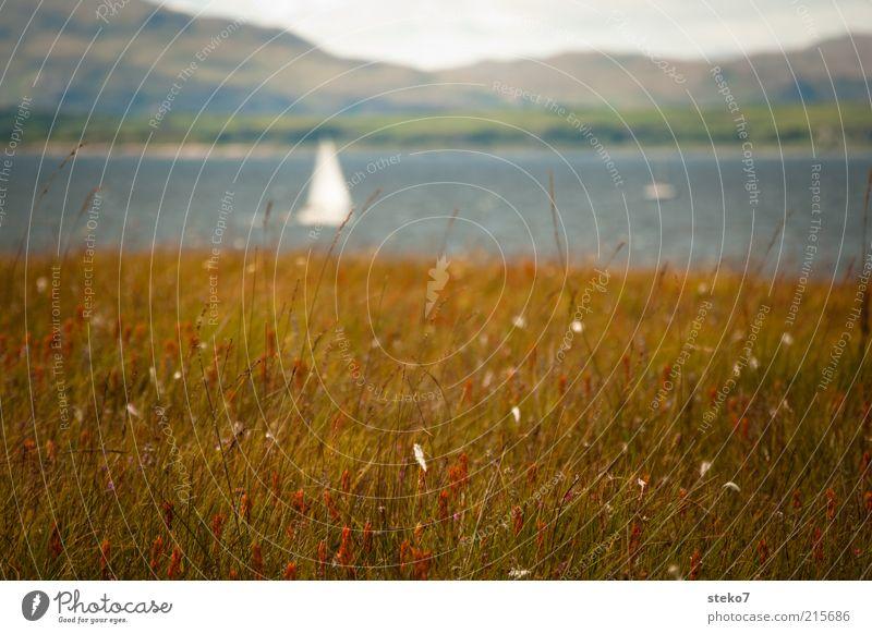 Schottische Küste Landschaft Gras Wiese Hügel Bucht Segelboot braun weiß Ferien & Urlaub & Reisen Schottland Sehnsucht Gedeckte Farben Außenaufnahme