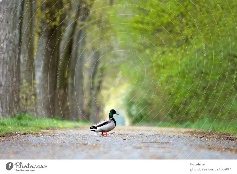 Der Weg ist das Ziel Umwelt Natur Landschaft Pflanze Tier Urelemente Erde Sommer Wetter Schönes Wetter Baum Gras Park Wildtier Flügel 1 frei hell nah natürlich