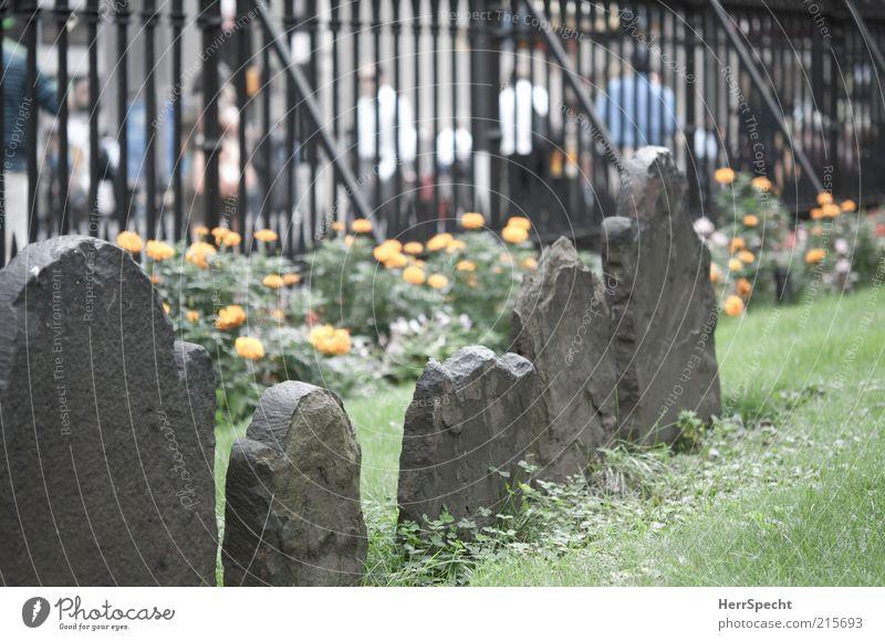 Die Toten und die Lebenden Mensch alt Blume Straße Wiese Leben Gras Stein historisch Zaun Friedhof Fußgänger verwittert New York City Grab bevölkert