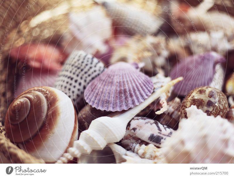 Strandgut. schön Ferien & Urlaub & Reisen ruhig Erholung Luft Zufriedenheit hell ästhetisch Wellness einzigartig Muschel Strandkorb Portugal Korb Souvenir