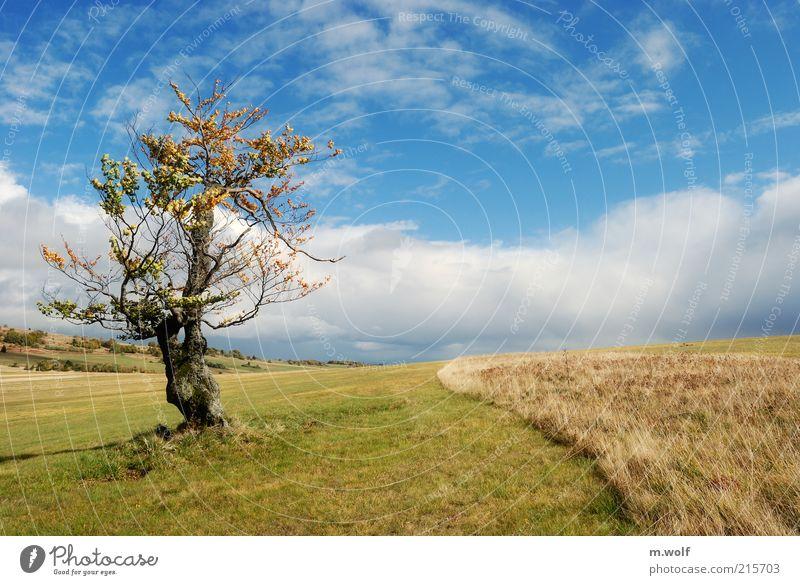 lonesome beech Natur blau grün Baum Wolken Ferne Umwelt Landschaft Wiese Berge u. Gebirge Herbst Stimmung Feld Schönes Wetter Umweltschutz Blauer Himmel