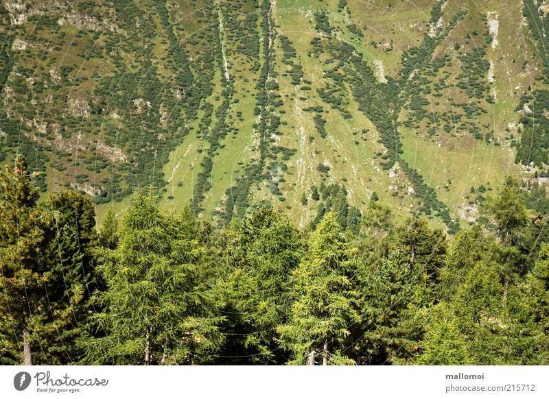 grün Wohlgefühl Zufriedenheit Ferien & Urlaub & Reisen Ausflug Sommer Berge u. Gebirge Umwelt Natur Landschaft Baum Tanne Fichte Wald Felsen Alpen nachhaltig