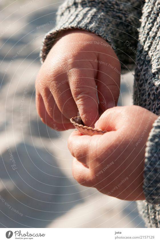 Muschelerkundung Zufriedenheit Freizeit & Hobby Kinderspiel Ferien & Urlaub & Reisen Ausflug Abenteuer Sommer Sommerurlaub Strand Kindererziehung Bildung lernen
