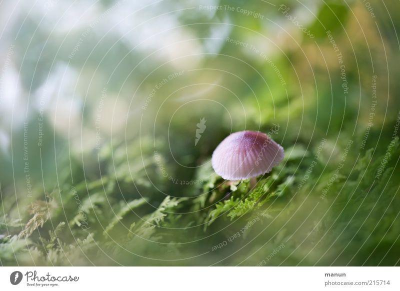 Sprössling Natur grün Ernährung Gras klein rosa niedlich lecker Bioprodukte Pilz Moos Gift herbstlich Vegetarische Ernährung Wildpflanze Pilzhut