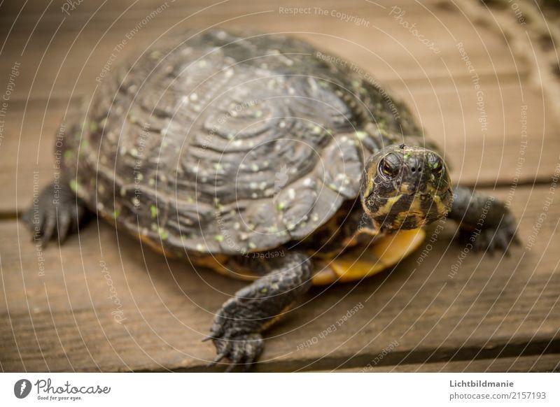 Blickkontakt Natur alt Tier Holz braun Wildtier laufen lernen beobachten Neugier Haustier Mut rennen exotisch Tiergesicht Zoo