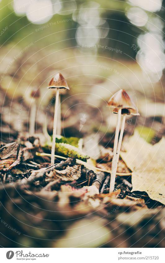 Fruchtkörper Umwelt Natur Pflanze Herbst Schönes Wetter Pilz Pilzhut natürlich Tag Sonnenlicht Schwache Tiefenschärfe Pilzkopf Waldboden Menschenleer
