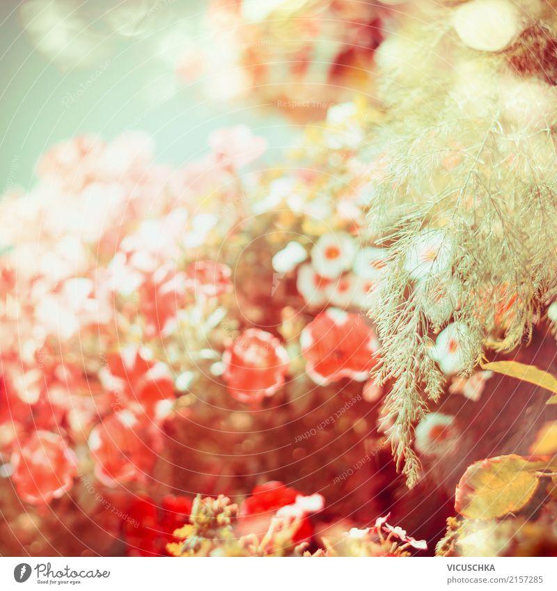 Schöner Spätsommer Design Sommer Garten Natur Pflanze Herbst Schönes Wetter Blatt Park Fahne weich Hintergrundbild Blume Petunie Farbfoto Außenaufnahme