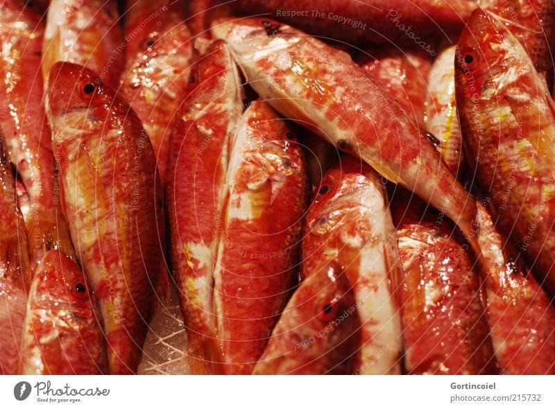 Rotbarbe Lebensmittel Fisch Ernährung Schuppen rot Barbe Mullus barbatus Rote Meerbarbe Farbfoto mehrfarbig Nahaufnahme Reflexion & Spiegelung viele Glätte