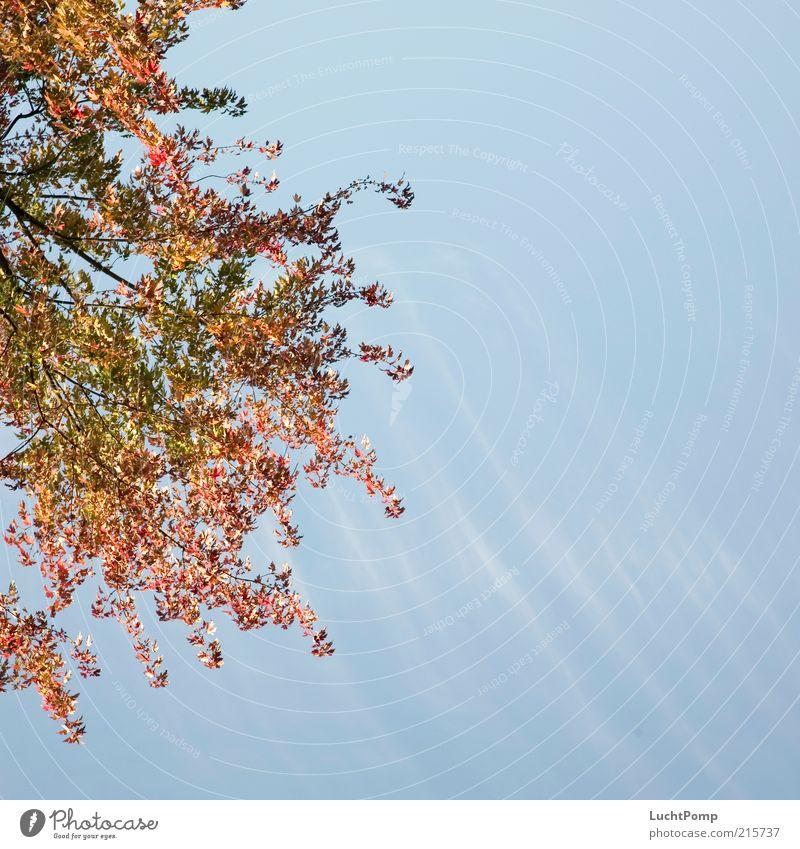 Halber Herbst herbstlich Herbstlaub rot gelb mehrfarbig rotgelb gelb-orange Zweige u. Äste blau Blauer Himmel hell-blau Wolken Wolkenhimmel Wolkenband gestreift