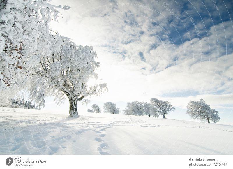 für alle Winterhasser Ferien & Urlaub & Reisen Ausflug Schnee Winterurlaub Umwelt Natur Landschaft Himmel Schönes Wetter Baum Hügel hell kalt blau weiß wandern