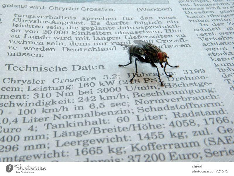 Technisches Interesse Zeitung lesen Mitteilung Fliege Technik & Technologie