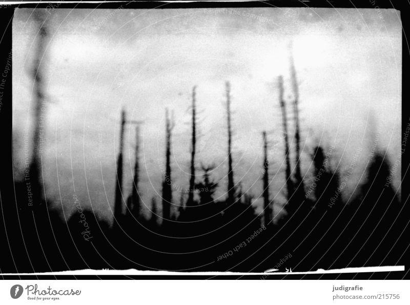 Brocken Natur Baum Einsamkeit Wald dunkel grau Traurigkeit Landschaft Stimmung Umwelt Trauer bedrohlich Vergänglichkeit natürlich außergewöhnlich analog