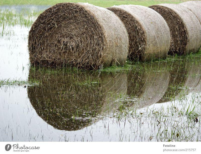 Überflutung Umwelt Natur Landschaft Pflanze Urelemente Wasser Herbst Gras Wiese hell nass natürlich Heu Heuballen Stroh Strohballen Überschwemmung überschwemmt