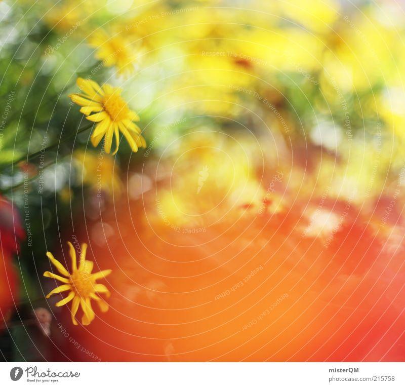 Beautiful Day. Kunst ästhetisch ruhig Frieden Blume Blumenwiese Blüte Blühend gelb dezent Wärme angenehm Leichtigkeit Hintergrundbild viele Unschärfe Frühling