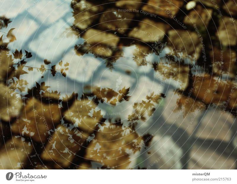 Regentag. Wasser dunkel Herbst grau Traurigkeit braun Wetter nass ästhetisch Jahreszeiten Zeit Kopfsteinpflaster Baumkrone abstrakt Pfütze schlechtes Wetter