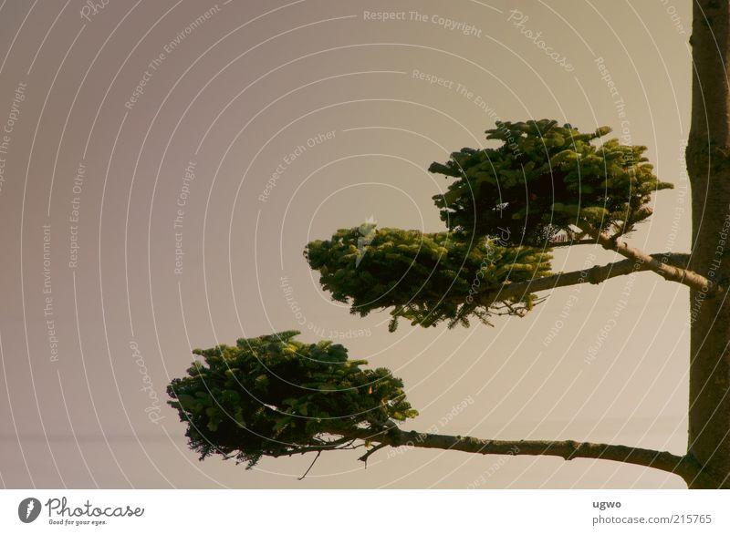 drei ebenen Natur Himmel Baum grün ruhig braun ästhetisch Wachstum rund natürlich Baumstamm Grünpflanze Zweige u. Äste