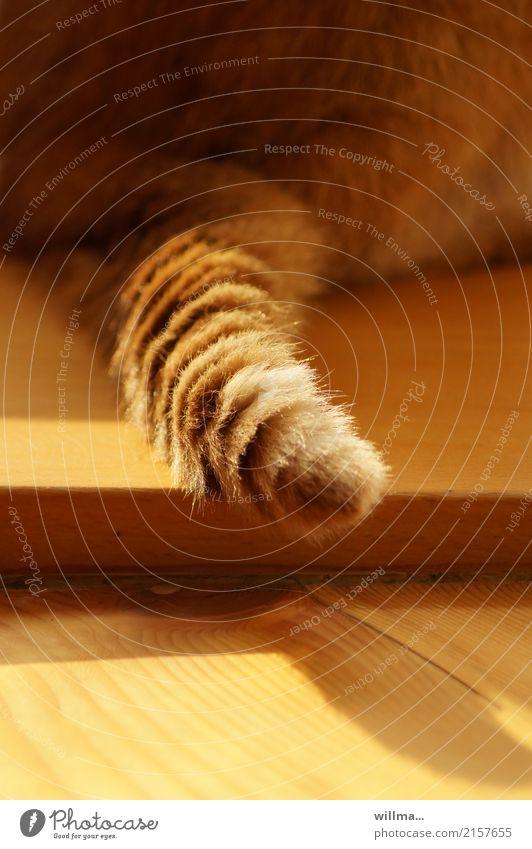 Schwanzgesteuert Katze Fell Hauskatze Haustier weich Tierliebe Holzfußboden rotbraun Detailaufnahme Rückansicht