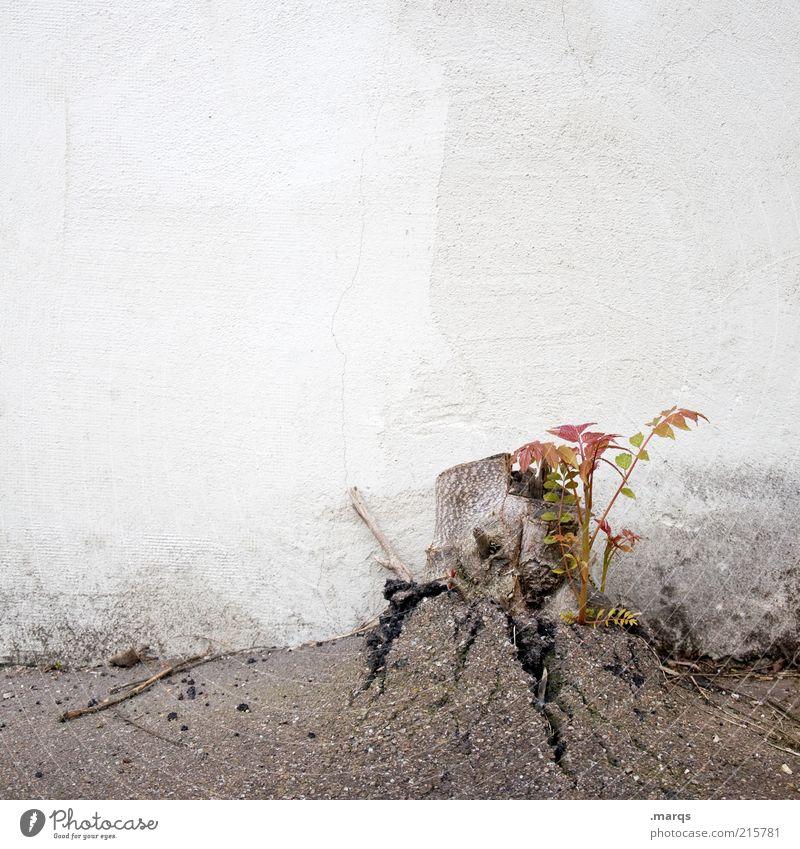 Naturgewalt Natur Pflanze Wand Mauer Kraft Beton Wachstum kaputt trist Wandel & Veränderung Urelemente Asphalt Zeichen Willensstärke Jungpflanze Durchbruch