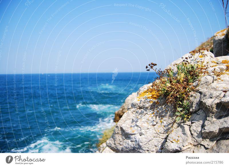 Meerespflanze Ferien & Urlaub & Reisen Tourismus Ausflug Ferne Sommerurlaub Insel Pflanze Luft Wasser Wolkenloser Himmel Blume Gras Felsen Wellen Küste Bucht