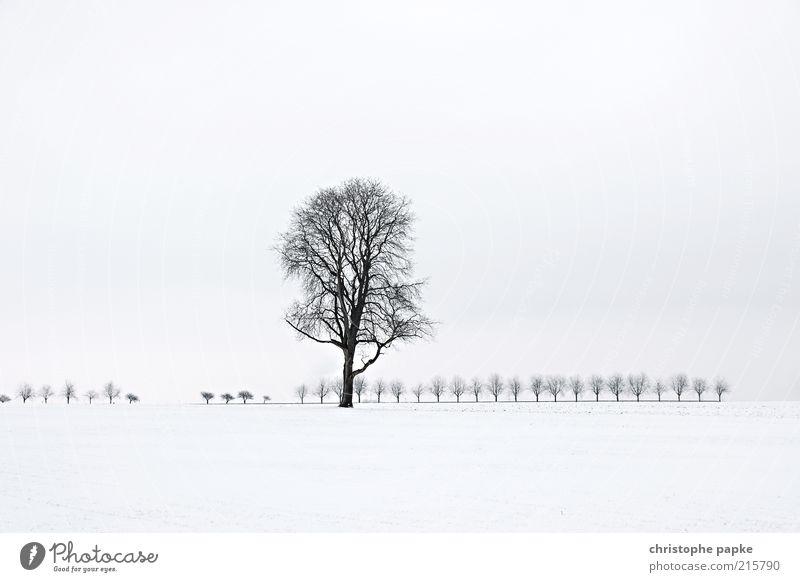 Baum in Schneelandschaft Winter Eis Frost Feld frieren kalt weiß standhaft Traurigkeit Trauer Einsamkeit Natur Vergänglichkeit Ferne Gedeckte Farben