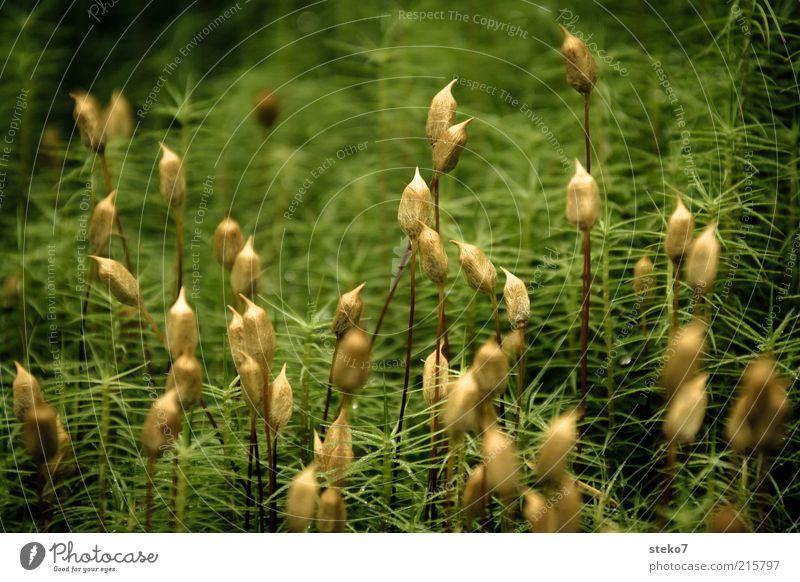famoos II Natur grün Blüte Gras Landschaft braun ästhetisch Wachstum Blühend Moos stachelig