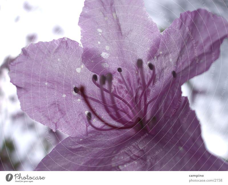 Spring Detail Blüte rosa violett Frühling Park Detailaufnahme