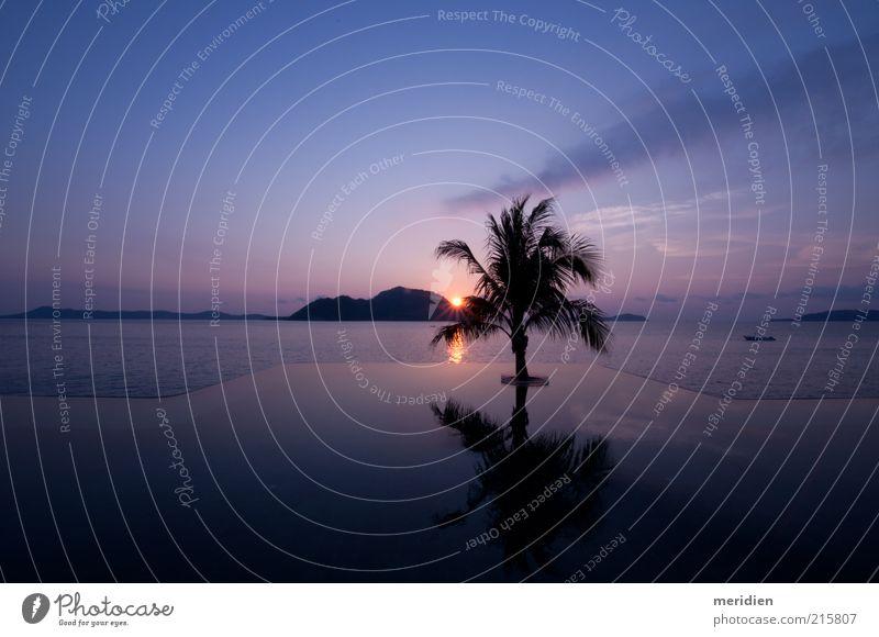 Tropischer Sonnenaufgang Landschaft Himmel Sonnenuntergang Schönes Wetter Baum Ferien & Urlaub & Reisen schaukeln natürlich schön blau Stimmung Gelassenheit