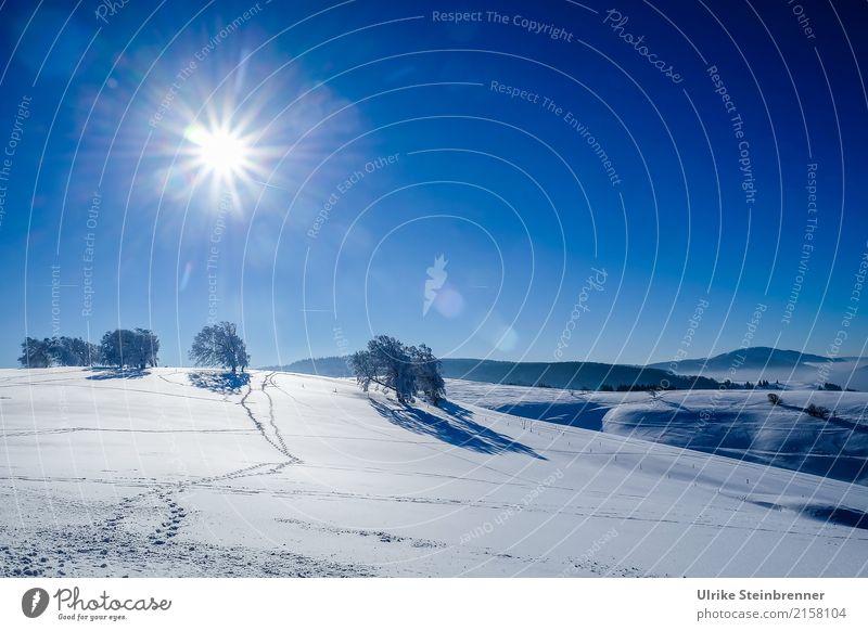 Schwarzwaldwinter Natur Ferien & Urlaub & Reisen Pflanze Landschaft Baum Erholung Winter Wald Berge u. Gebirge Umwelt natürlich Schnee Tourismus hell leuchten