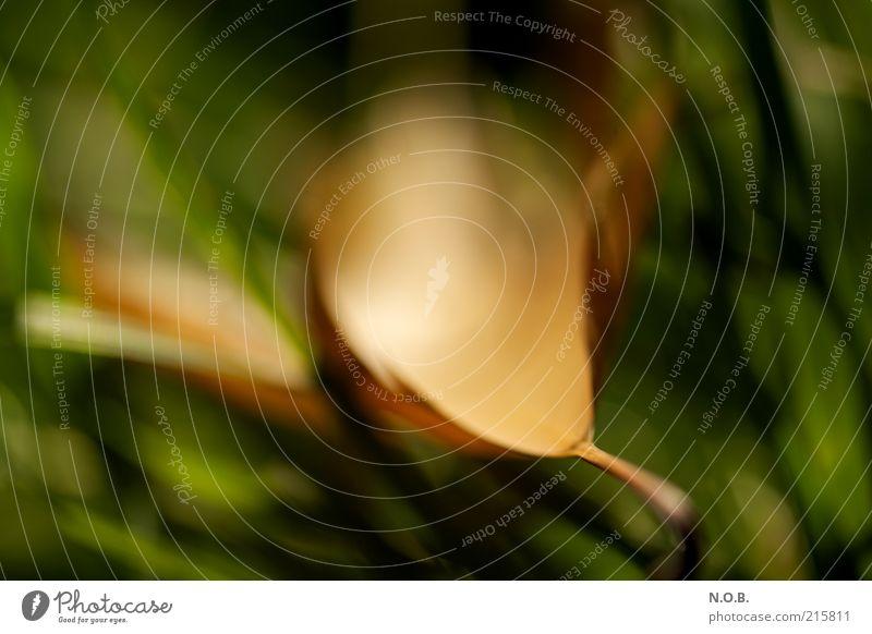 Herbstfeuer Natur grün Pflanze Blatt Wiese Herbst Gefühle Stimmung braun Umwelt gold ästhetisch natürlich Gelassenheit abstrakt achtsam